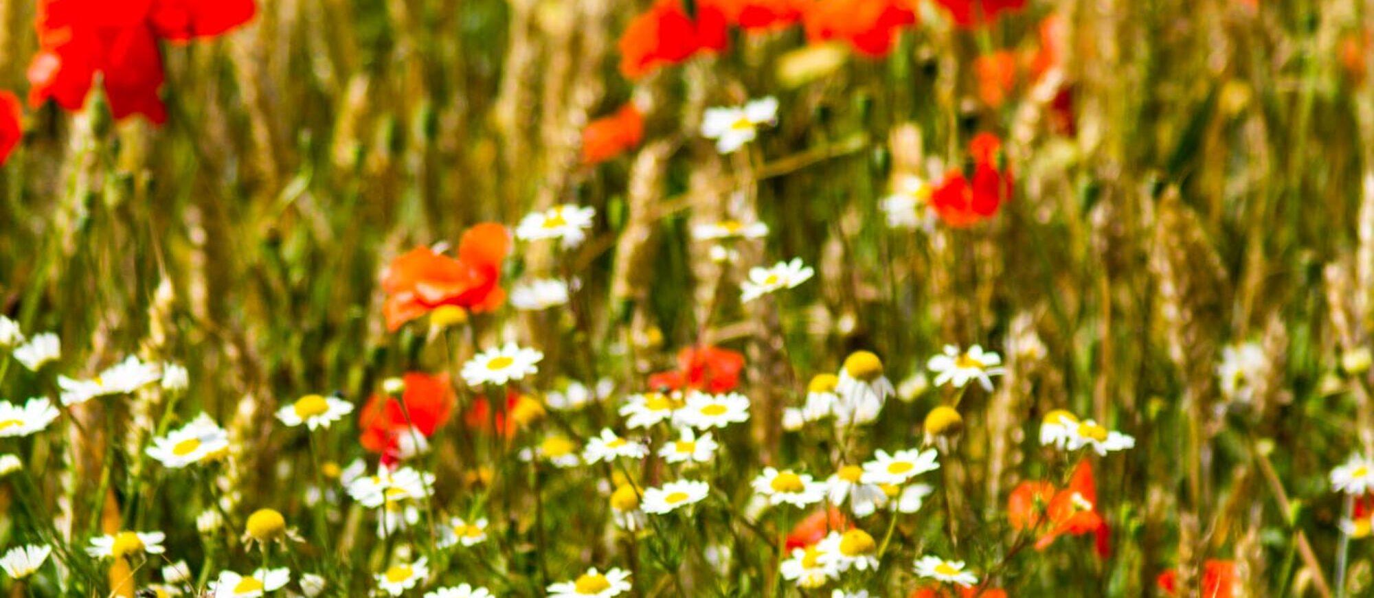 Økologi og Bæredygtighed på Tuse Næs